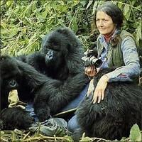 Dian Fossey (1)