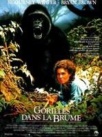 Affiche Gorilles_dans_la_brume