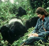Dian Fossey (3)