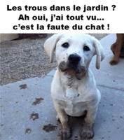 chiens-meme-droles-2