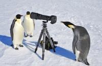 pingouin_paparazzi