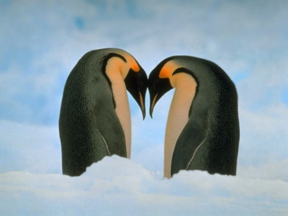 pingouins_harmonie_amurrrrr