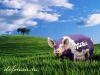 Milka cochon