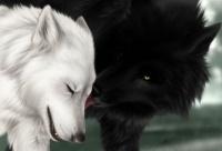 loups am2
