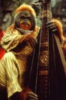 sénateur musicien de la planète des singes