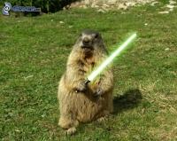 [images.4ever.eu] marmotte, sabre laser, star wars