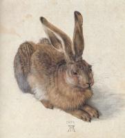 albrecht Dürer ''Lièvre'' (1502)