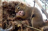 ecureuil et bb