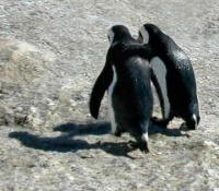 pingouins2