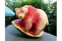ours sculpté dans une pastèque! miam