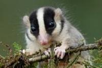 opossum14