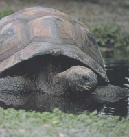 tortue géante des Seychelles peut vivre 200 ans