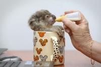 mini biberon pour mini koala^^