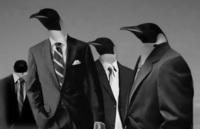 Pingouins citadins