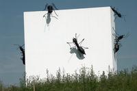rond-point-envahi-par-les-fourmis