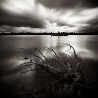 The dead tree - photo laurent Miaille3