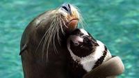 calin-pingouin