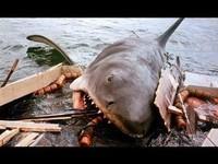 requin_les dents de la mer