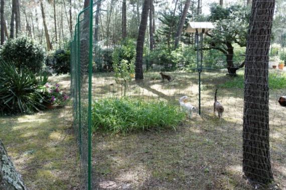Comment ne pas faire loigner ses chats de son jardin - Comment eloigner les chats de mon jardin ...
