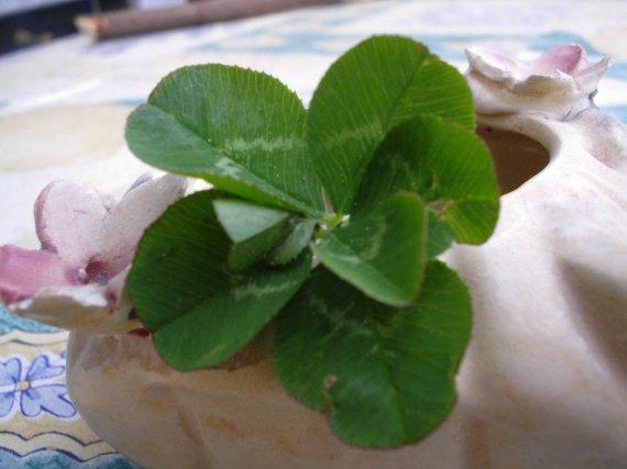 trèfle a 7 feuilles