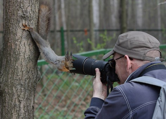 ecureuil-curieux-photo