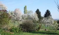arbres en fleurs 2014