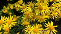 fleurs jaunes , beau fond d'écran