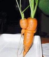 maman carotte et son bébé