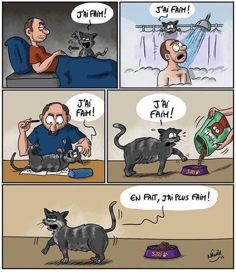 chat capricieux