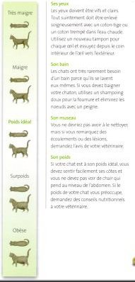 poids animaux