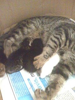 2.chatons1jour