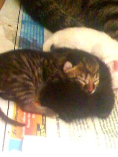 4.chatons2jours