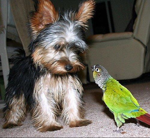 chien et oiseau