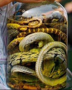 liqueur-serpent 3