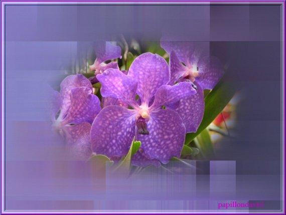 encore une belle fleur