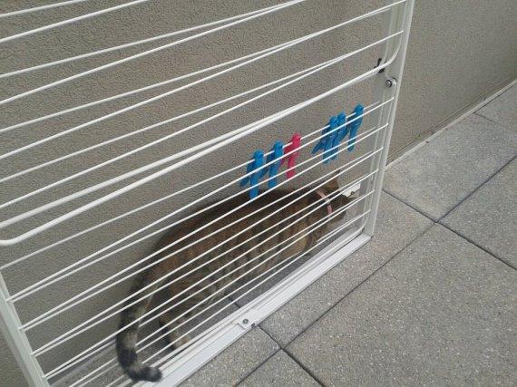 cannelle sur le balcon =)