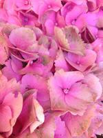 fleurs qui brunissent
