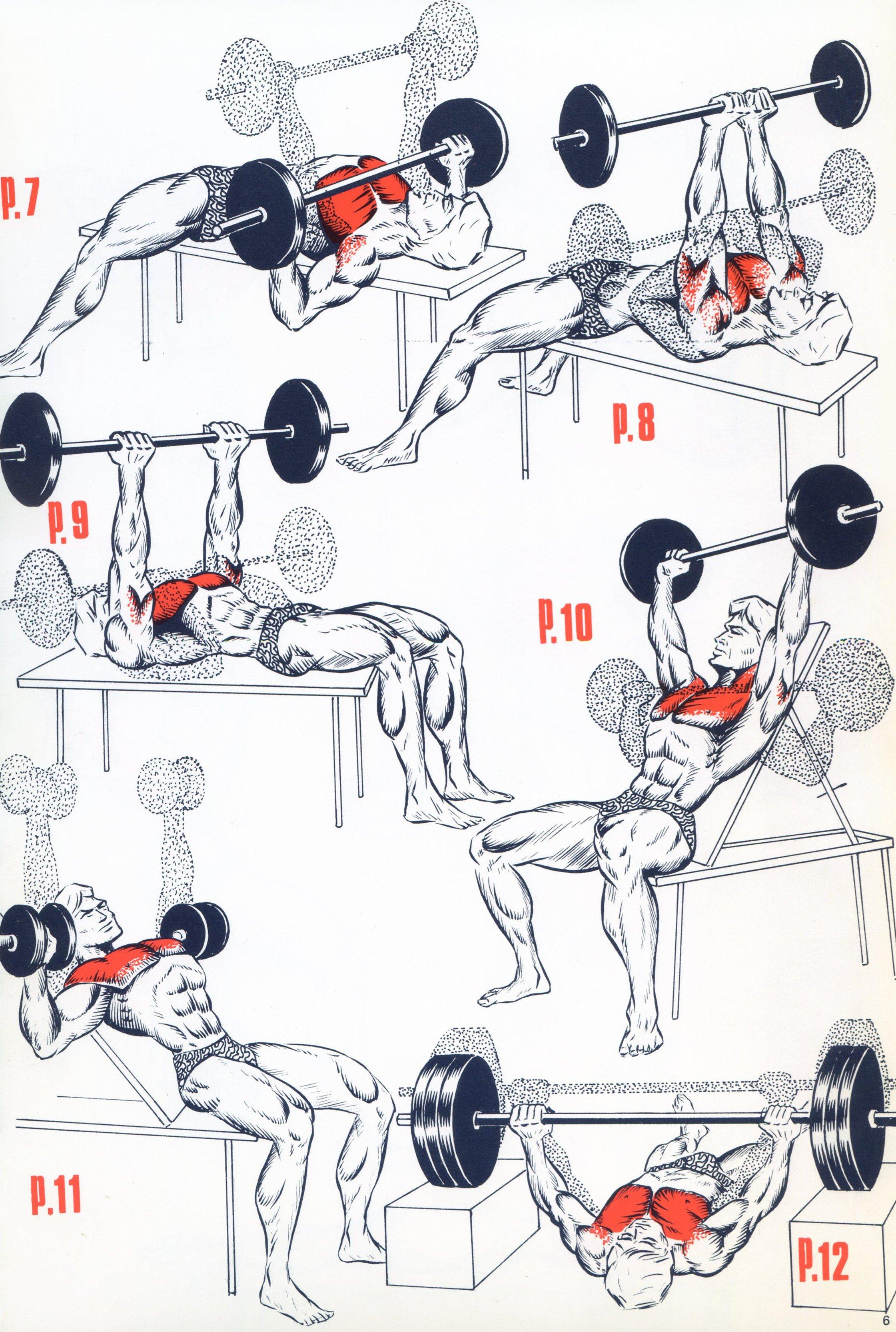 En haut Exercices Triceps - Musculation - FORUM Forme & Sport @SZ_04