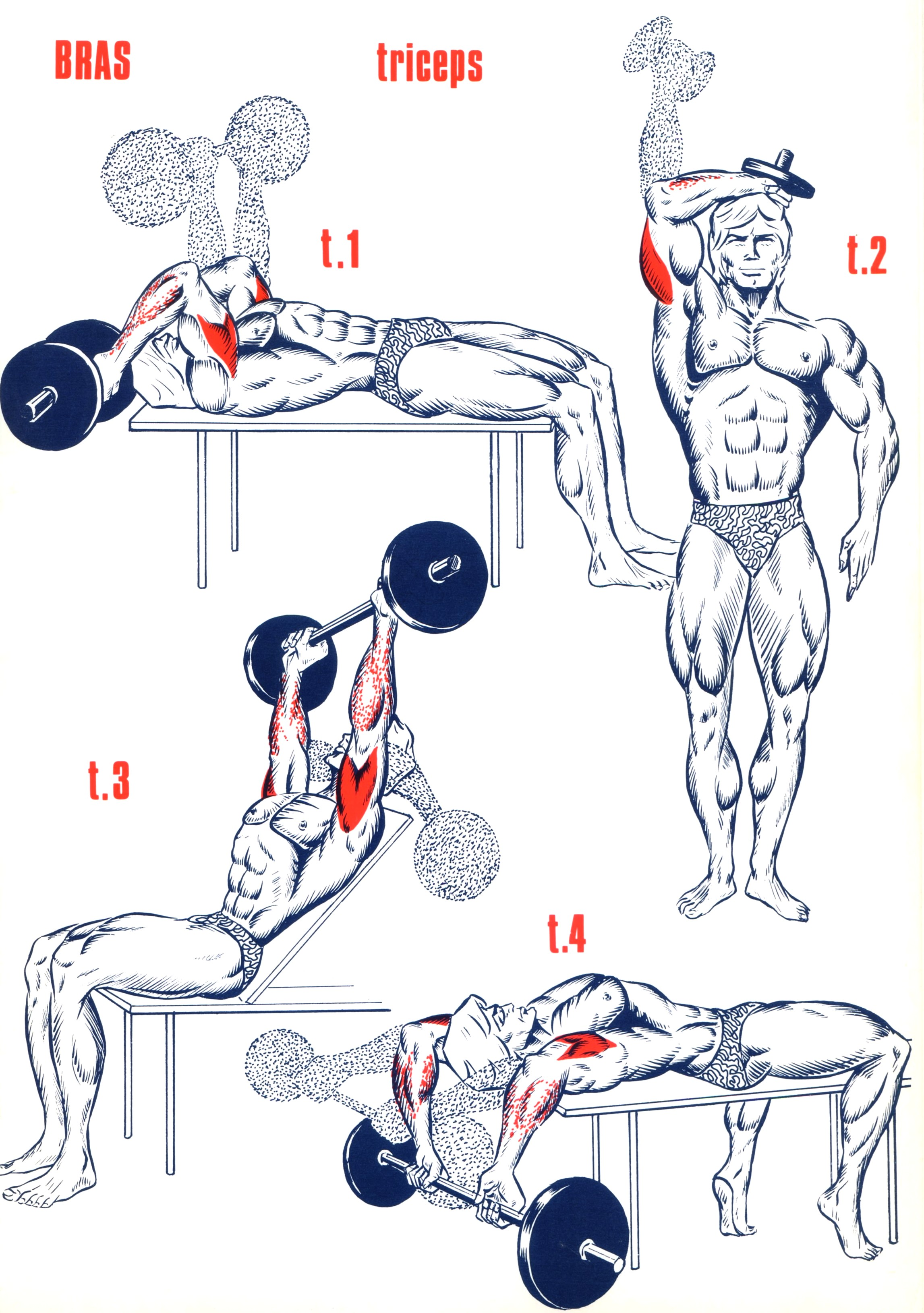 Exercices Triceps - Musculation - FORUM Forme   Sport f978978426a