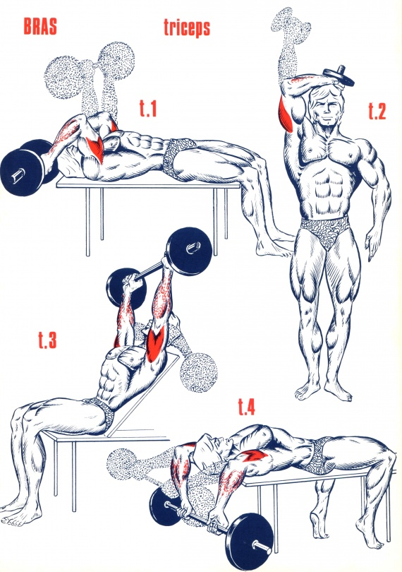 Exercices Triceps - Musculation - FORUM Forme & Sport
