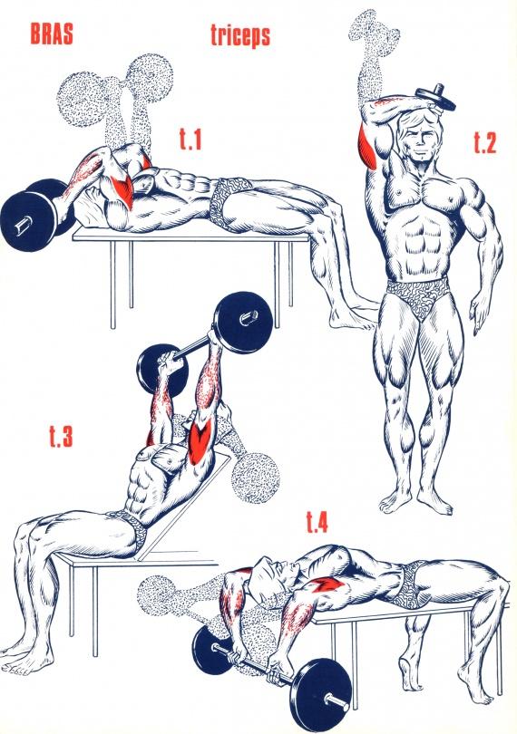 programme triceps volume
