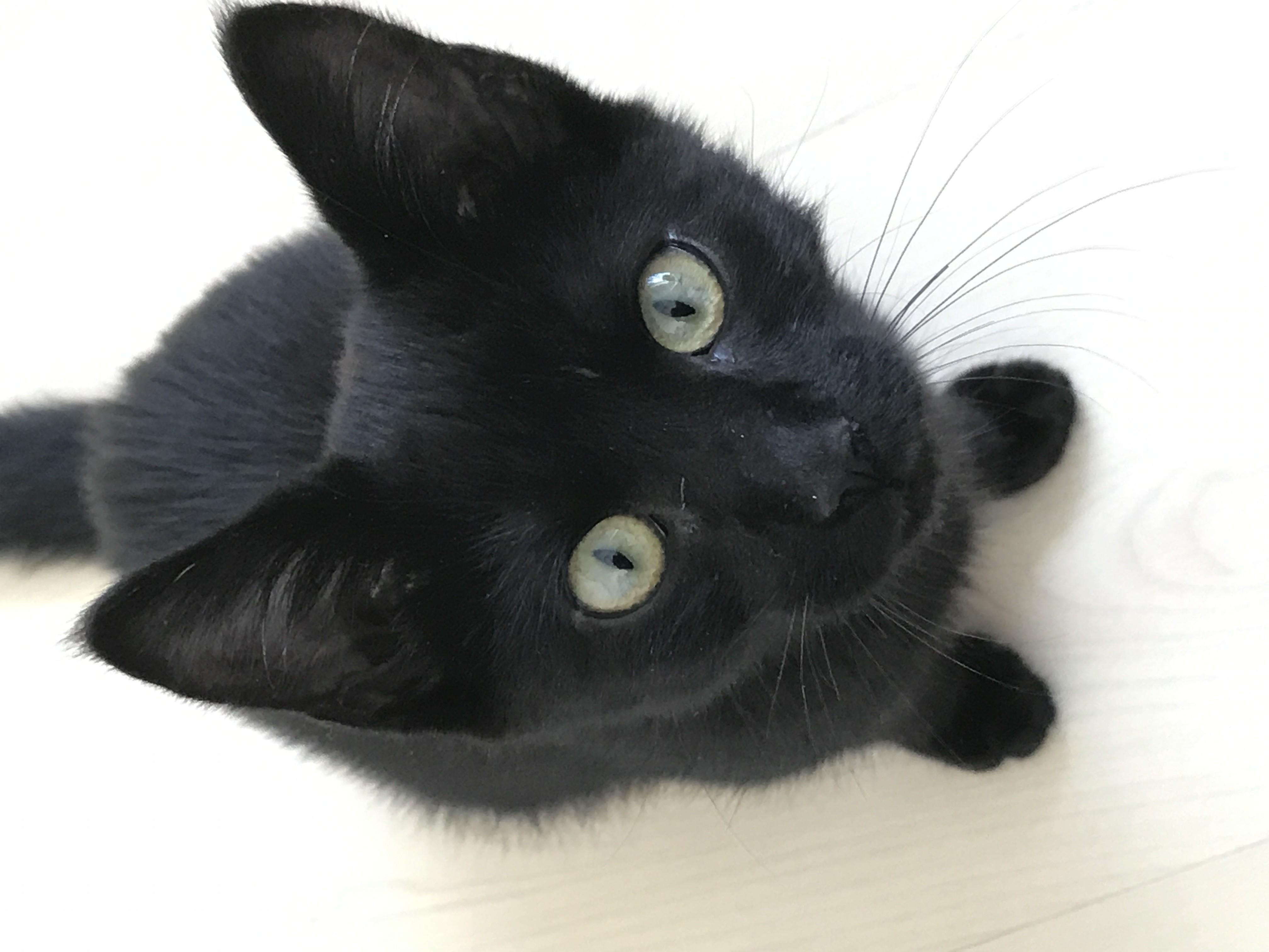 site de rencontre sérieux chat en ligne gratuit entlebuch