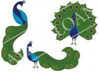 peacocks-lg-web