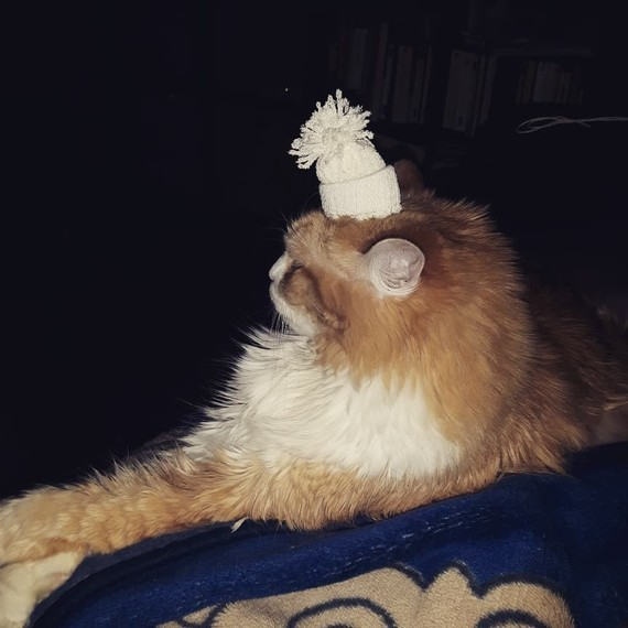 chat bonnet de noël