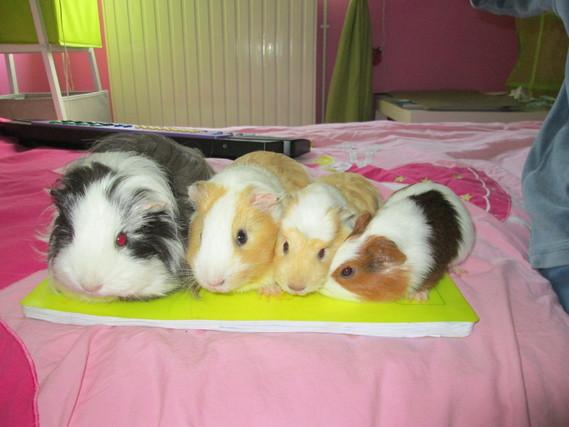 la petite famille(viva,vanille,amandine et aden)