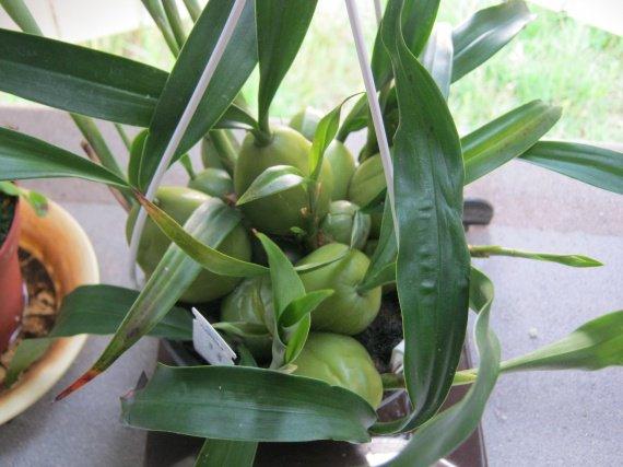 orchidees-img_2537-img.jpg
