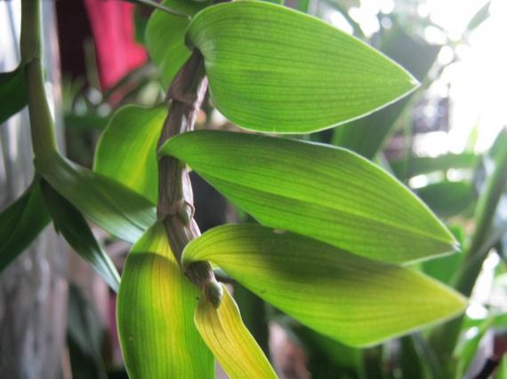 orchidees-2-img_2601-img.jpg
