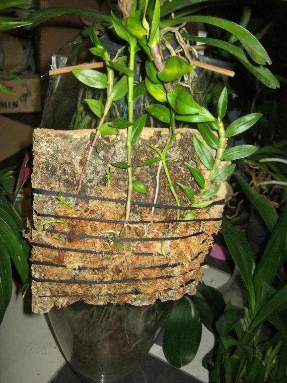 orchidees-2-img_2611-img.jpg