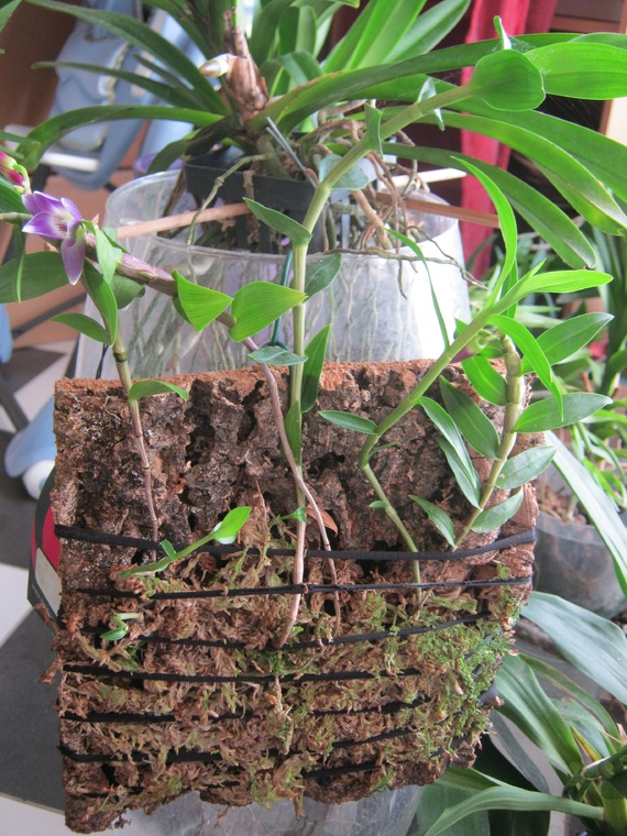 orchidees-2-img_2763-img.jpg