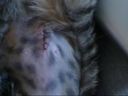 cicatrice2